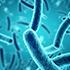 základními druhy bakterií