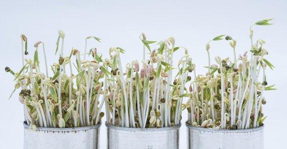 10 nejlepších rostlin pro zen menopauzu a způsoby, jak je využít